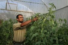 gaza-greenhouse150